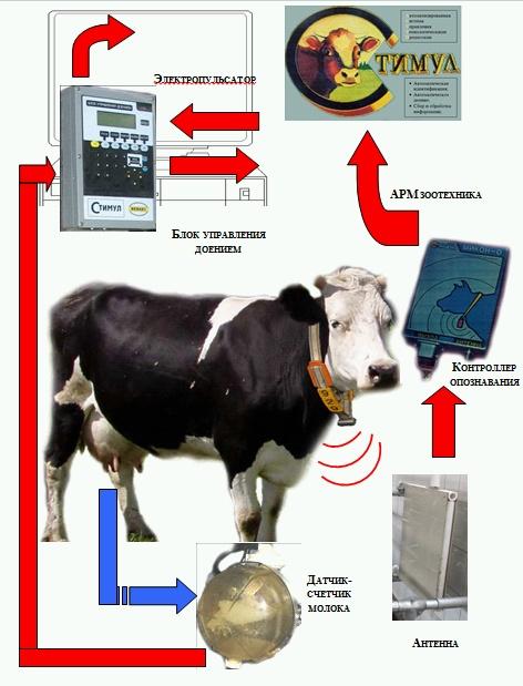 Система автоматического управления процессом доения Стимул 3