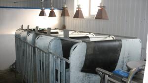 Комплект оборудования для содержания и выпойки телят профилакторного периода 2