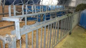 Самофиксирующая кормовая решётка для содержания и кормления телят до 3-х месяцев 2